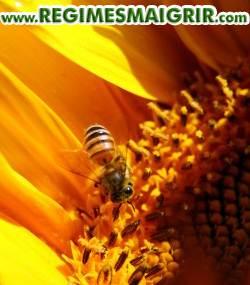 Une abeille posée sur un tournesol