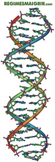 Le profil génétique peut être étudié pour établir la meilleure nutrition possible en adéquation avec chaque individu