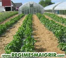 Une ferme biologique demande plus d'espace pour cultiver