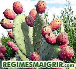 La figue de Barbarie nous vient du Mexique et contient beaucoup de fibres
