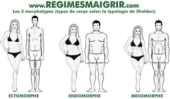 Schéma montrant les 3 morphotypes (types de corps) les plus courants