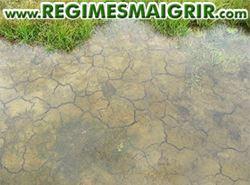 Un sol asséché depuis longtemps ne peut absorber l'eau assez vite s'il est inondé