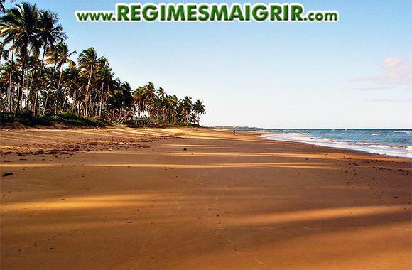 Une plage et des cocotiers