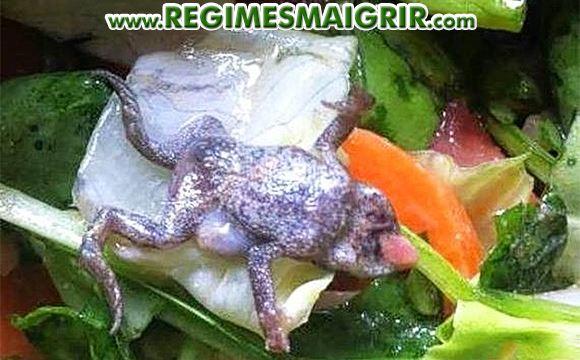 Une grenouille mourut dans un sac d'épinards