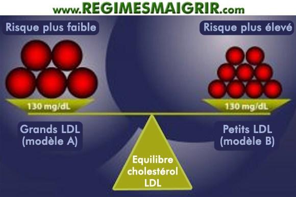 Explication de l'équilibre entre les quantités de cholestérol LDL