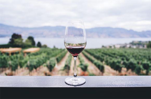 Verre de vin rouge posé devant un vignoble