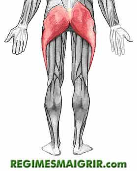 La marche � pied fait travailler les muscles fessiers (zone en rouge sur cette image)
