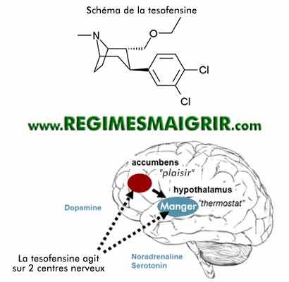 Le schéma du médicament tesofensine, les actions de la tesofensine sur les centres nerveux