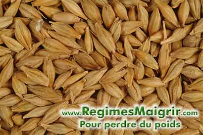 Les graines d'orge sont très riches en fibres solubles et réduisent le taux de cholestérol