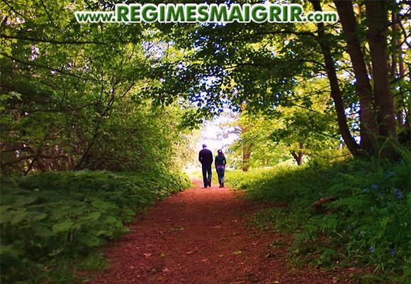 Une balade à pied dans la forêt est très bénéfique pour la santé si vous en faites régulièrement
