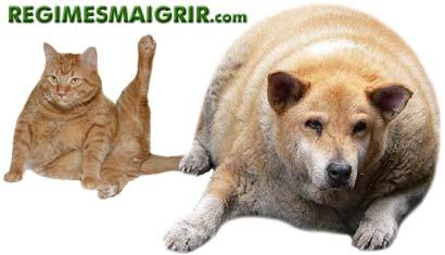 Un chat en surpoids et un chien obèse devraient interpeller son maître