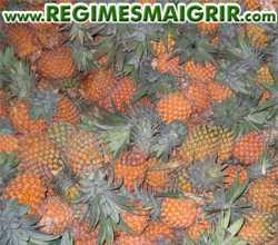 Des ananas bien mûrs entassés les uns sur les autres