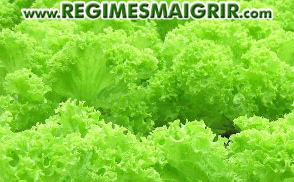 Les légumes-feuilles verts comme les salades font partie des aliments à haute teneur en manganèse