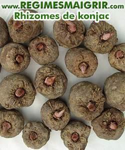 Rhizomes de la plante konjac
