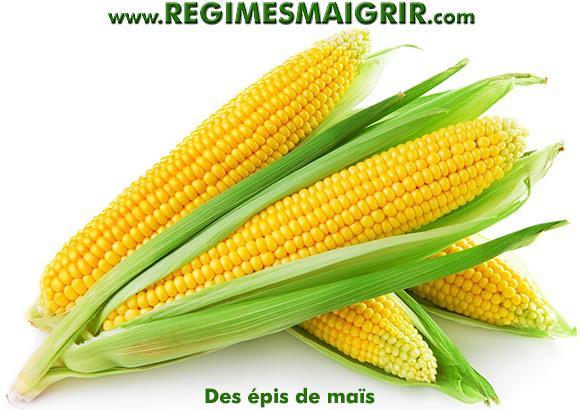 Quelques épis de maïs frais