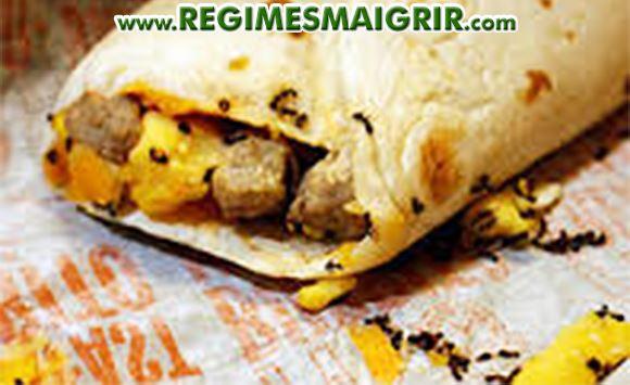 Environ 50 fourmis ont été retrouvées inanimées dans un burrito acheté chez McDo