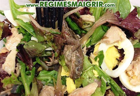 Une grenouille morte a été retrouvée dans de la salade bio à New-York