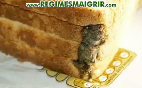 Un rongeur mort dans du pain