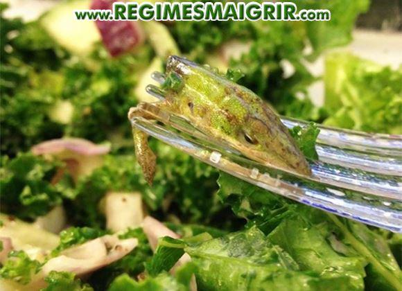 Une tête de lézard relativement difficile à voir a été retrouvée dans une salade de chou