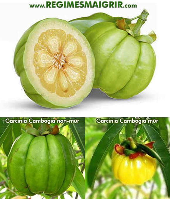 Le fruit Garcinia Cambogia est souvent de couleur jaunâtre quand il est mûr