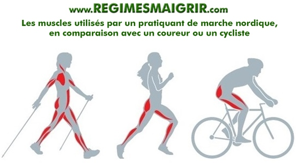 Comparaison des groupes musculaires utilisés entre une personne qui fait de la marche nordique, de la course à pied ou du vélo