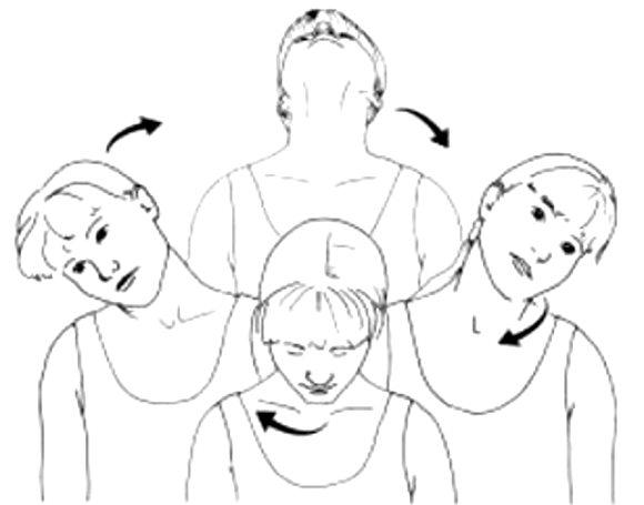 Les mouvements de rouleau du cou